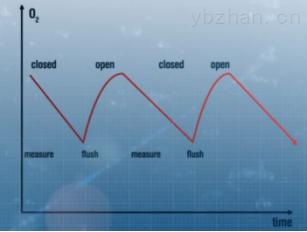 斑马鱼呼吸代谢测量系统