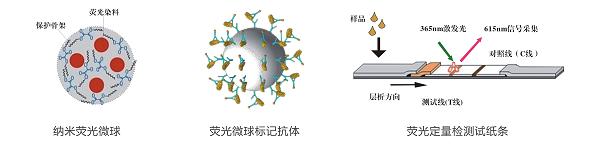 黄曲霉毒素荧光定量快速检测试纸条原理